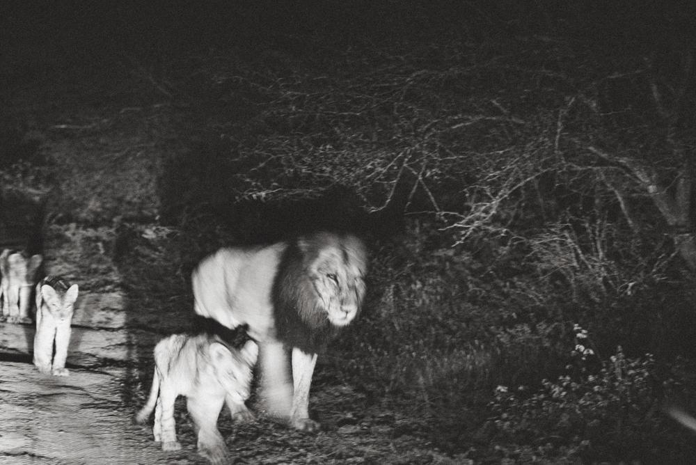 Lion Sands Kruger Park Fernwehosophy Elisaveta Schadrin-Esse (118).jpg