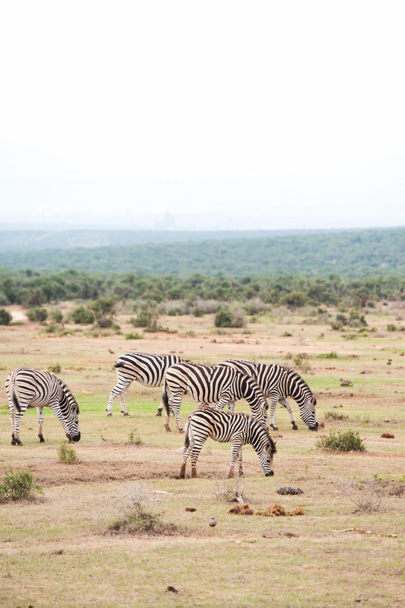 Road Trip South Africa (188 von 256).jpg