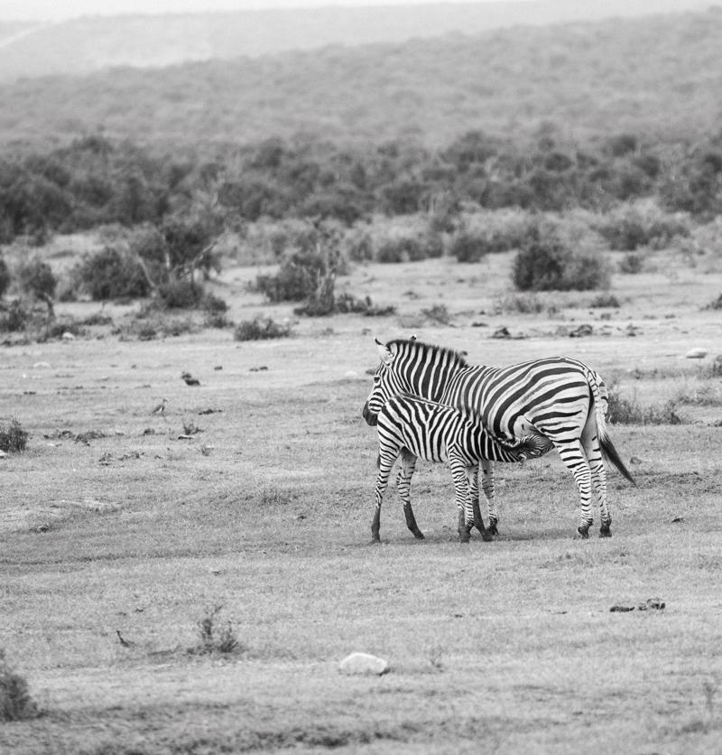 Road Trip South Africa (190 von 256).jpg