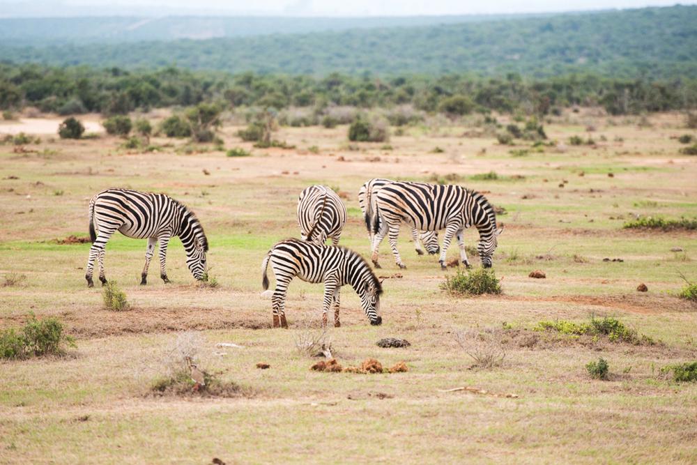 Road Trip South Africa (189 von 256).jpg