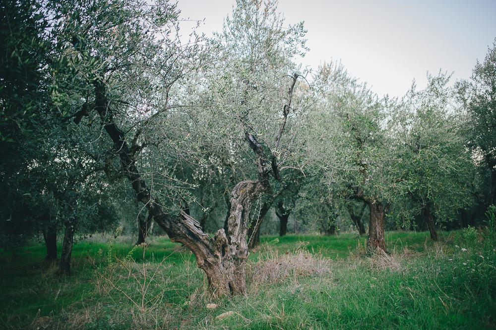 Tuscany Italy Stefan Lederer wedding photographer-122.jpg