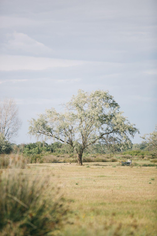 062 - FORMA - Camargue - fernwehosophy.jpg