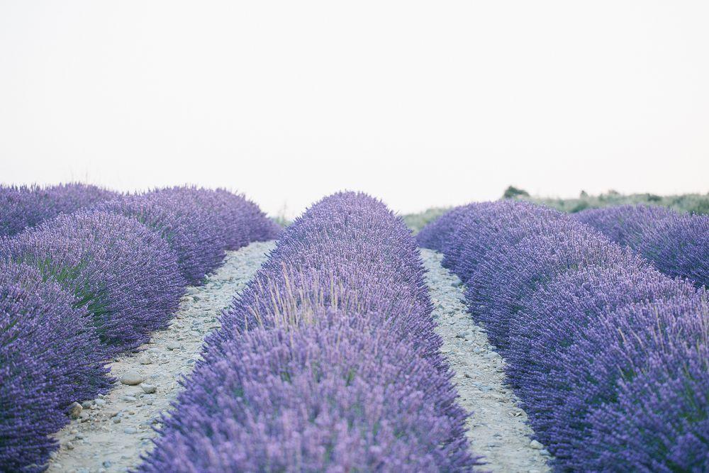 095 - FORMA - Provence - fernwehosophy.jpg