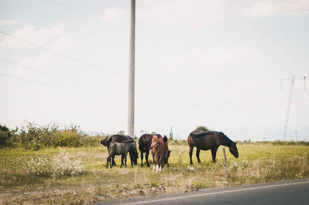 Rumänien-0276.jpg