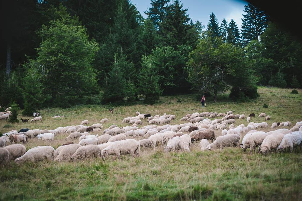 Rumänien-0592.jpg