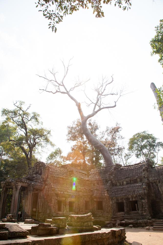 Nikki-Closser-Camodia-Thailand 29.jpg