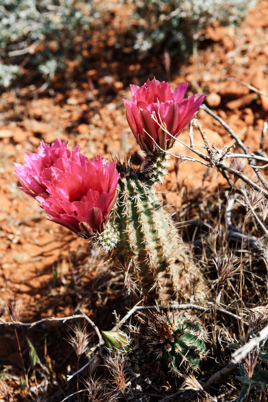 Arizona_Julia_Hofmann (9 von 93).jpg