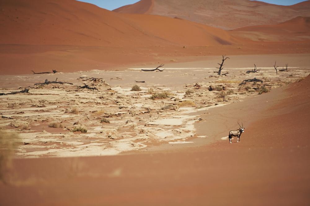 _DSC2450 fernwehosophy Namibia.jpg