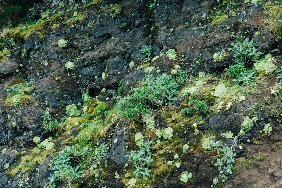 La Gomera 17.jpg