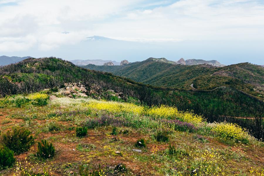 La Gomera 30.jpg