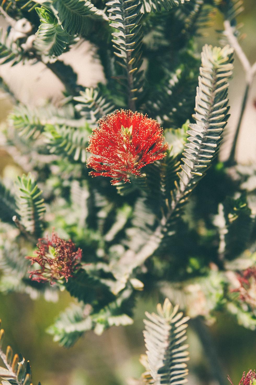 Westaustralien_Monika Ewa Kluz-11.jpg