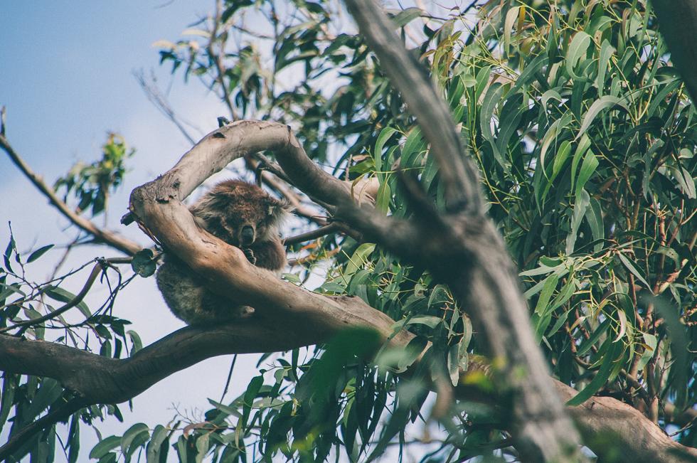 Westaustralien_Monika Ewa Kluz-78.jpg