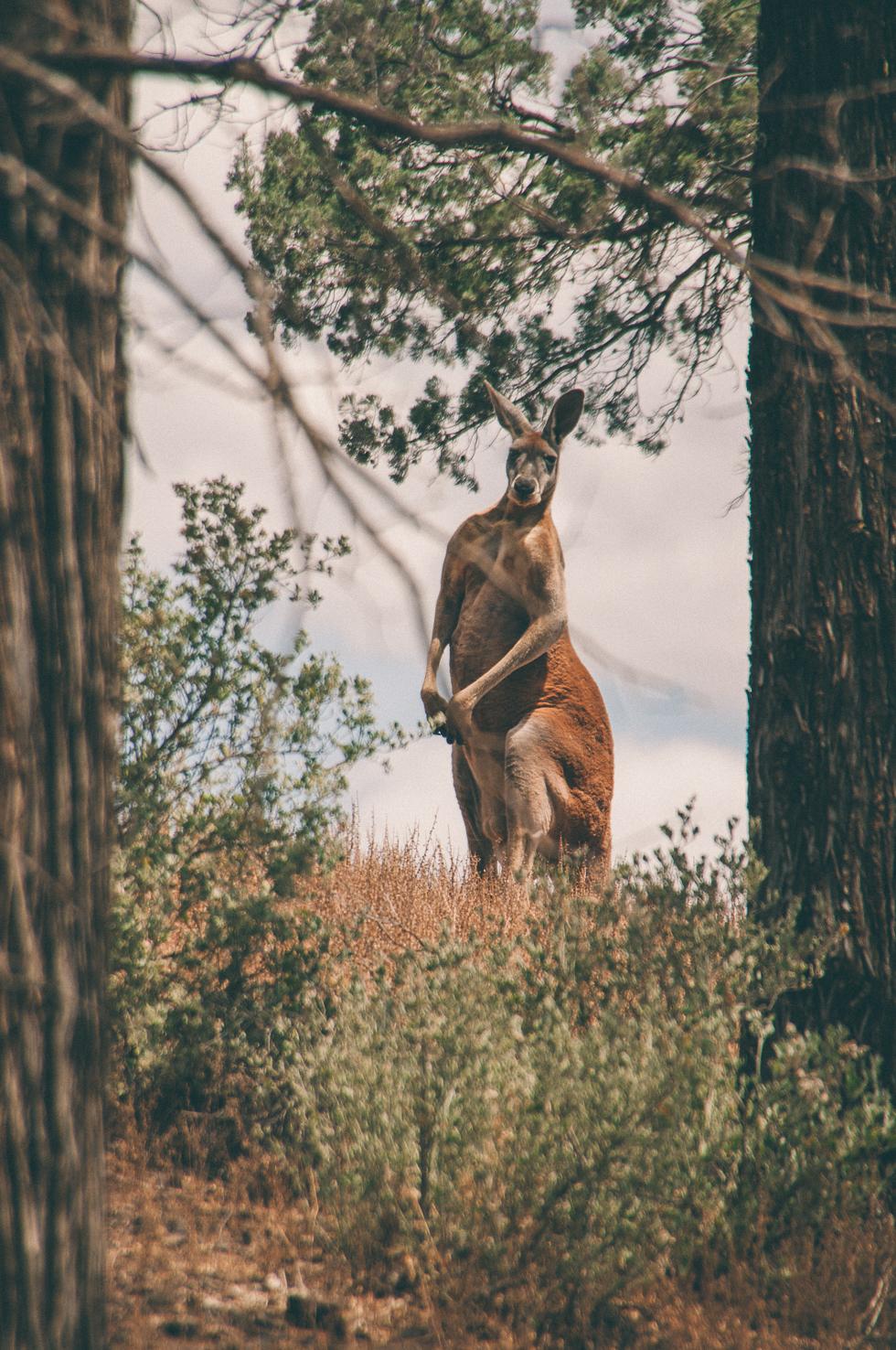 Westaustralien_Monika Ewa Kluz-42.jpg