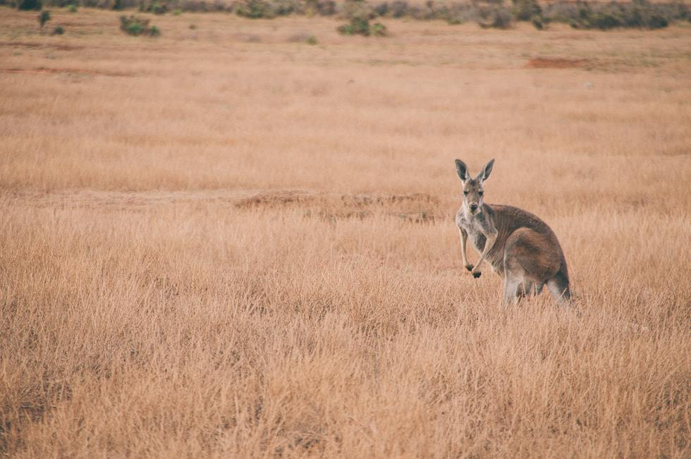 Westaustralien_Monika Ewa Kluz-45.jpg
