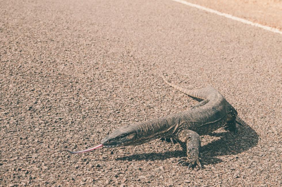 Westaustralien_Monika Ewa Kluz-69.jpg