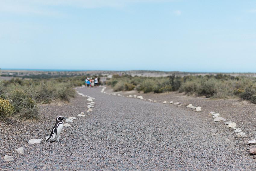 Argentina-Patagonien-2.jpg