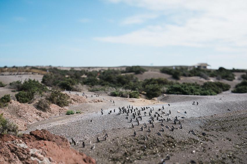 Argentina-Patagonien-4.jpg