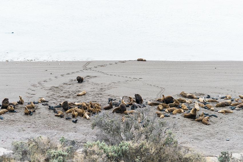 Argentina-Patagonien-21.jpg