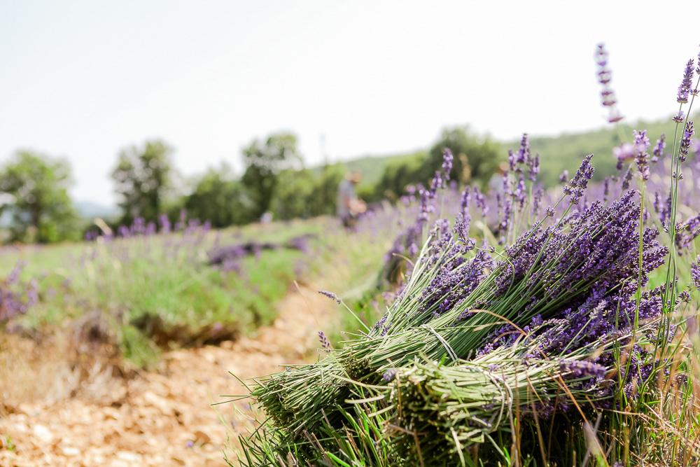 Provence Frankreich Urlaub-2.jpg