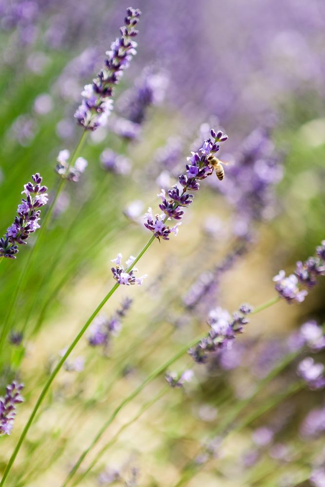Provence Frankreich Urlaub-3.jpg