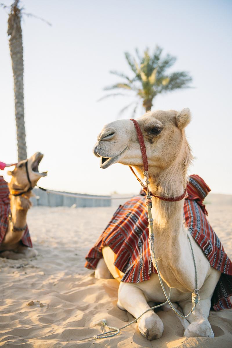 Dubai Abu Dhabi Reise Urlaub-15.jpg