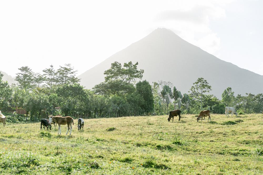 Costa Rica Lateinamerika Reise-20.jpg