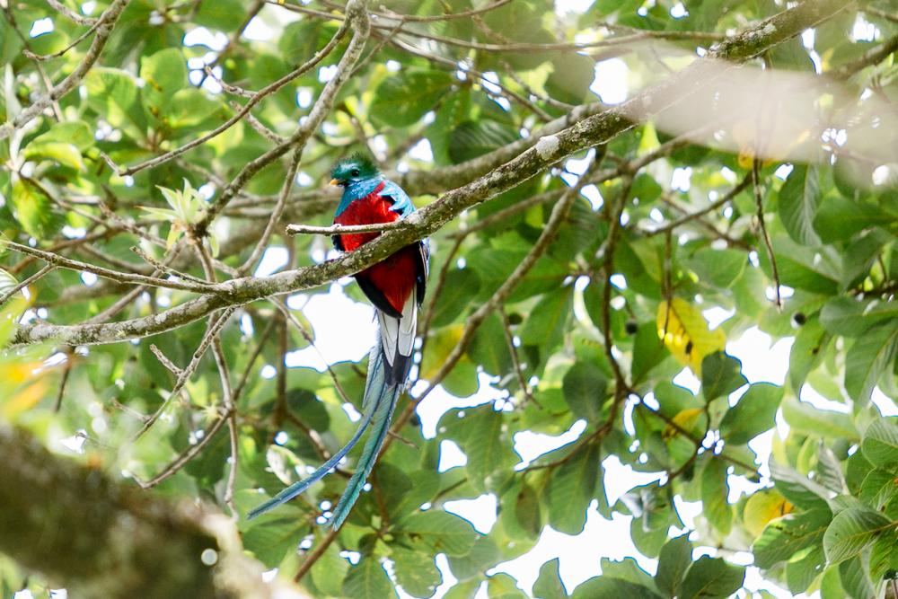 Costa Rica Lateinamerika Reise-25.jpg