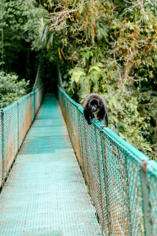 Costa Rica Lateinamerika Reise-26.jpg