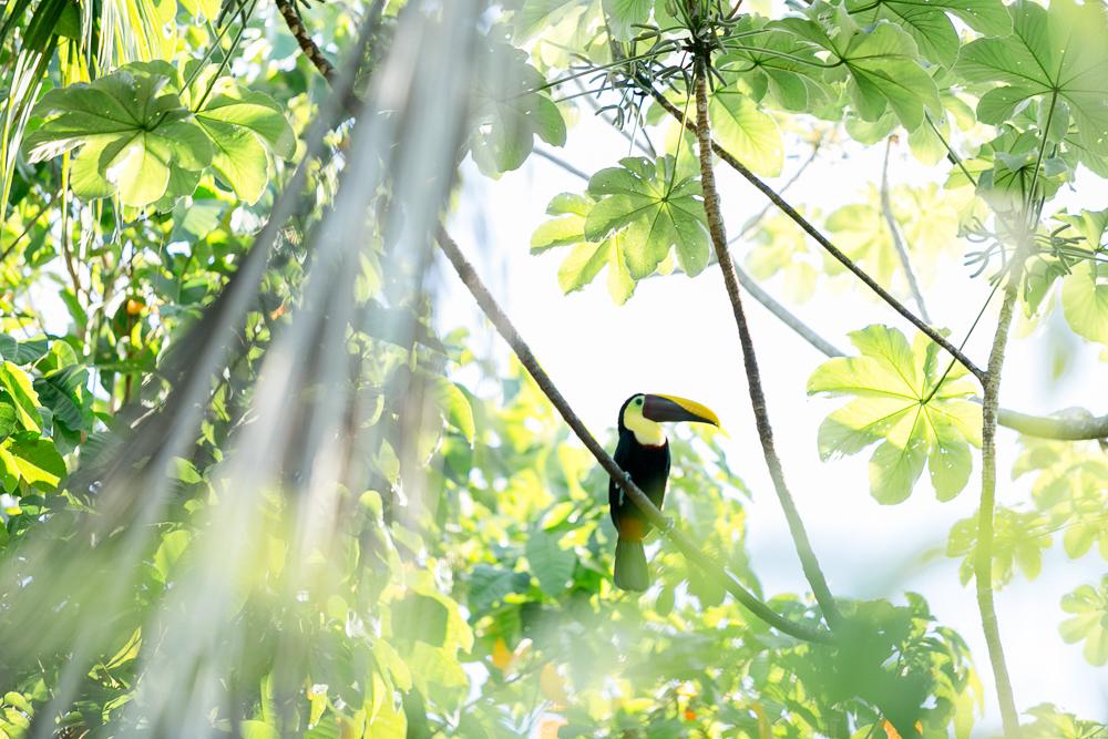 Costa Rica Lateinamerika Reise-30.jpg
