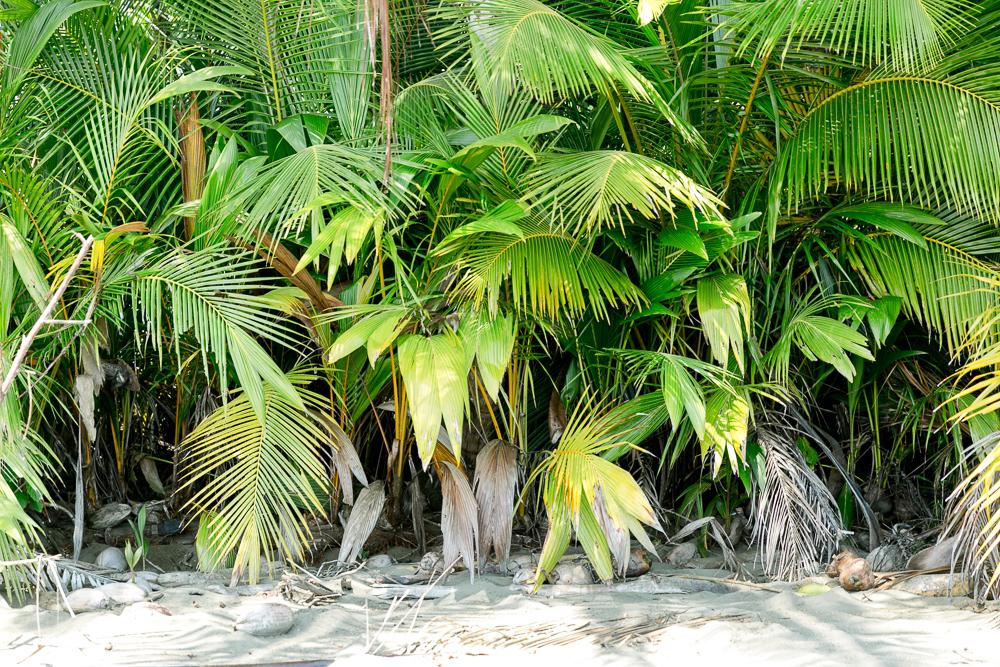 Costa Rica Lateinamerika Reise-34.jpg