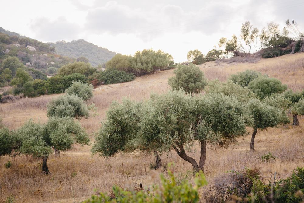 Sardinien Italien Urlaub-15.jpg