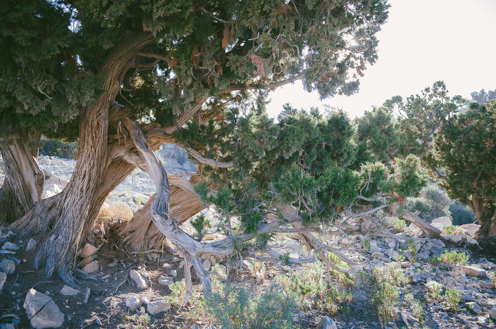 Oman Familienurlaub im Orient-31.jpg