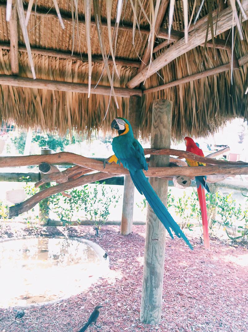 Miami Urlaub in Florida-12.jpg