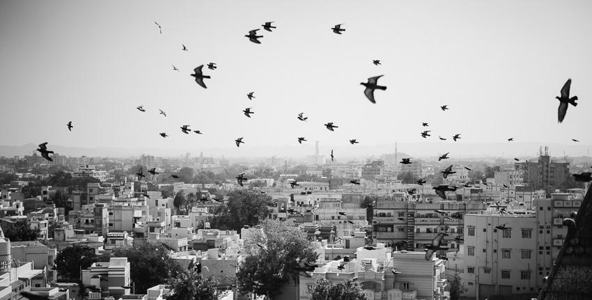 Gujarat Indien Reise-18.jpg