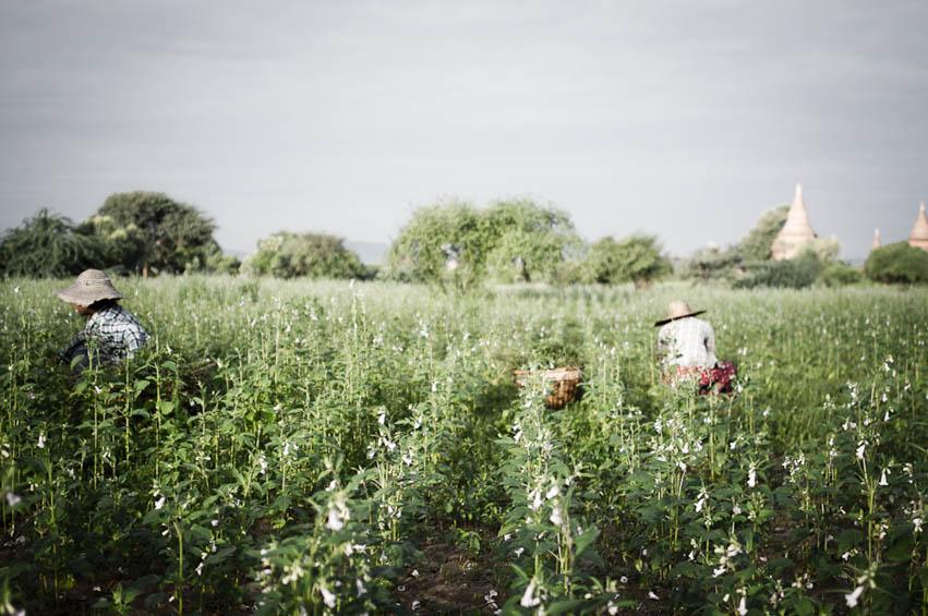 Myanmar-Steffen-Moeller-Fernwehosophy-Backpacking-Rreiseinspiration-Reisefotografen Kollektiv-9.jpg