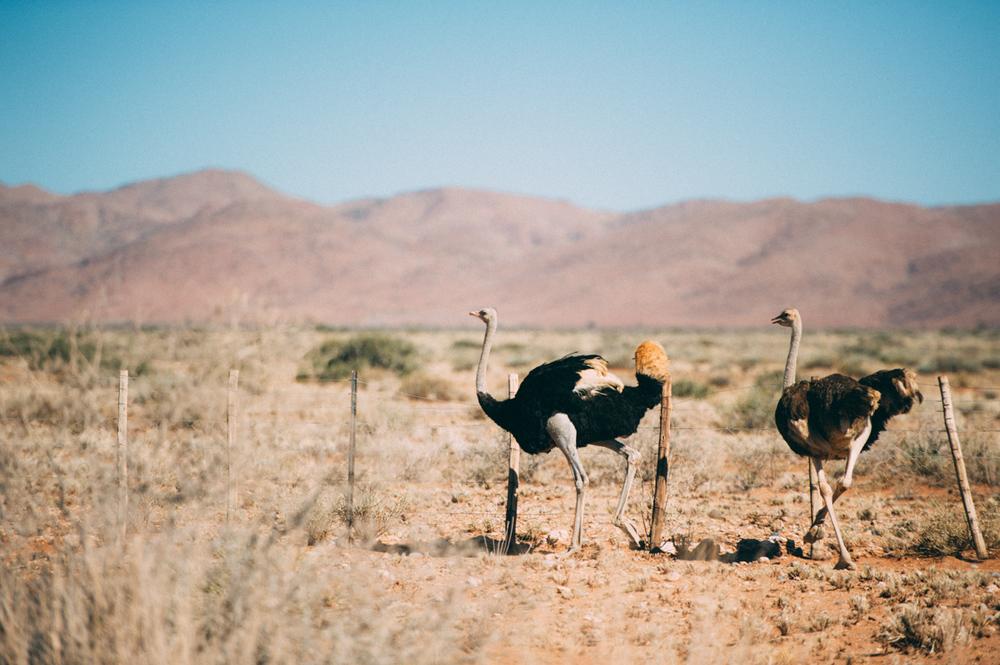 Fernwehosophy-Roadtrip-Namibia-Sossusvlei-Elisaveta-Schadrinesse (27 von 222).jpg