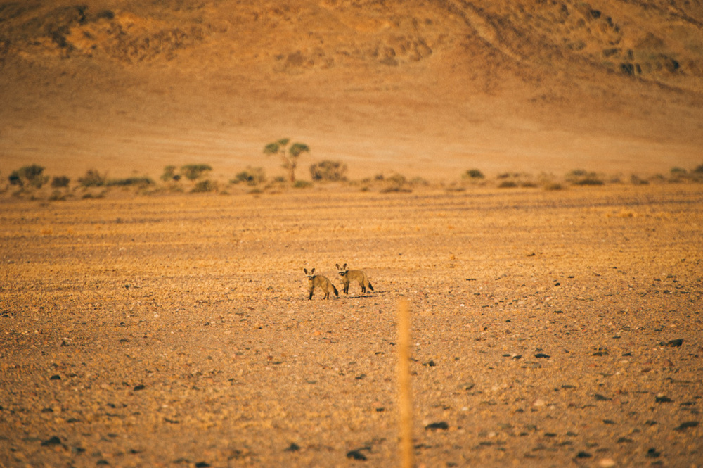 Fernwehosophy-Roadtrip-Namibia-Sossusvlei-Elisaveta-Schadrinesse (200 von 222).jpg
