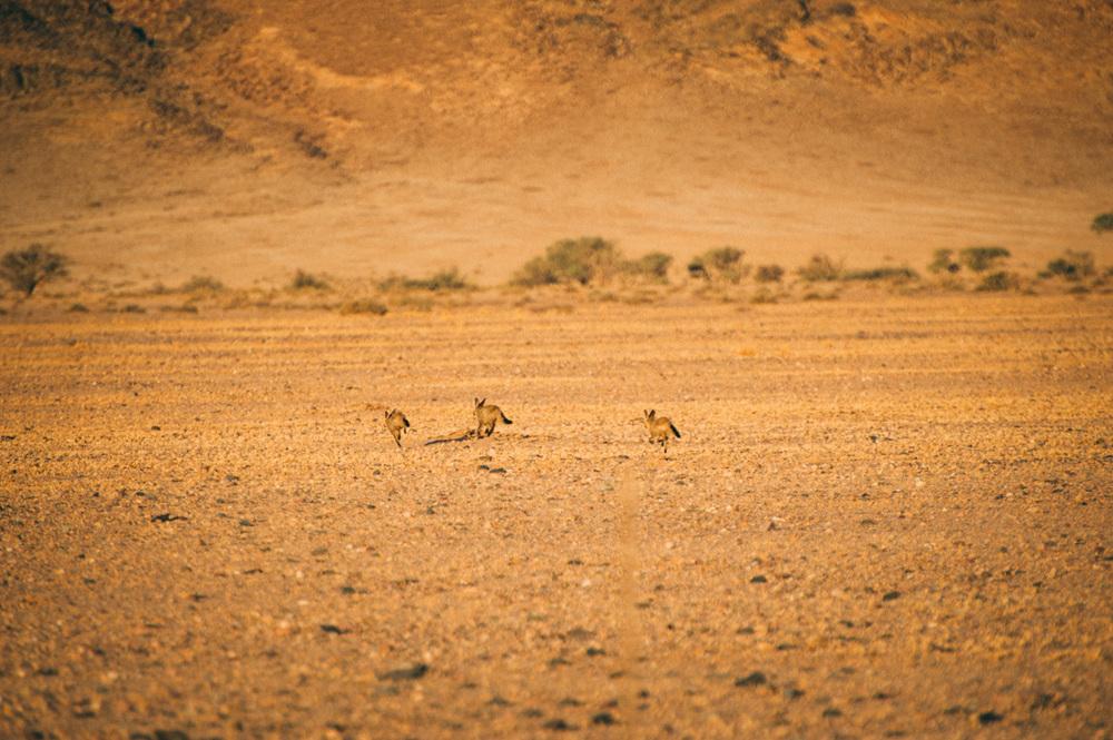 Fernwehosophy-Roadtrip-Namibia-Sossusvlei-Elisaveta-Schadrinesse (201 von 222).jpg