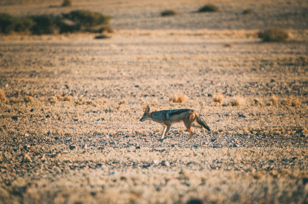 Fernwehosophy-Roadtrip-Namibia-Sossusvlei-Elisaveta-Schadrinesse (202 von 222).jpg