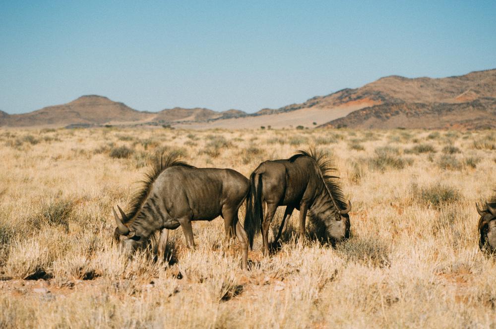 Fernwehosophy-Roadtrip-Namibia-Sossusvlei-Elisaveta-Schadrinesse2 (6 von 10).jpg