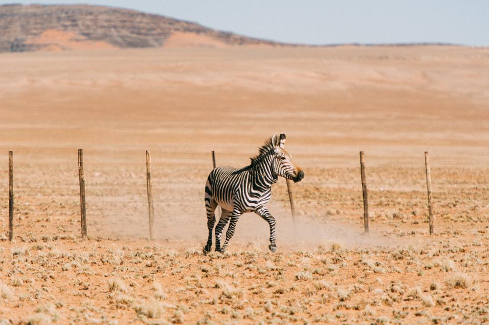 Fernwehosophy-Roadtrip-Namibia-Sossusvlei-Elisaveta-Schadrinesse2 (8 von 10).jpg