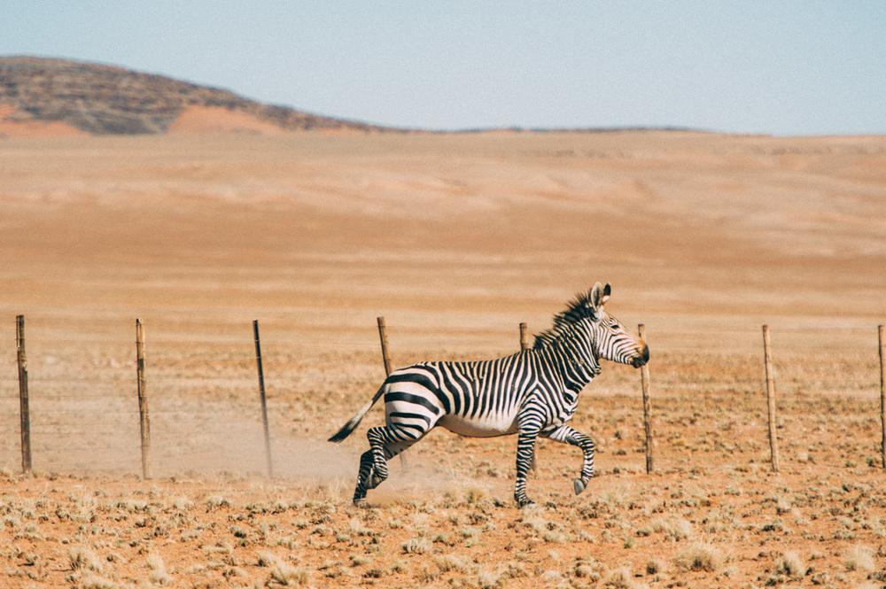 Fernwehosophy-Roadtrip-Namibia-Sossusvlei-Elisaveta-Schadrinesse2 (9 von 10).jpg