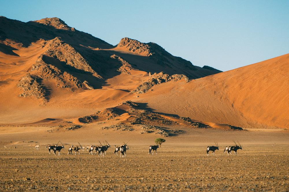 Fernwehosophy-Roadtrip-Namibia-Sossusvlei-Elisaveta-Schadrinesse (92 von 222).jpg