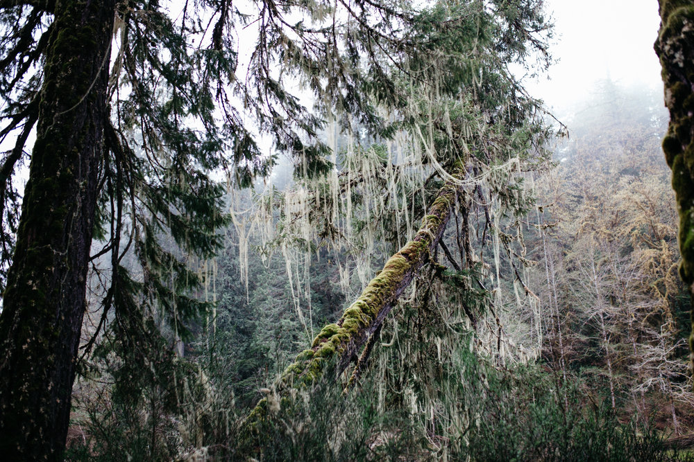 Vancouver Island (c)Kerstin Weidinger-8.jpg