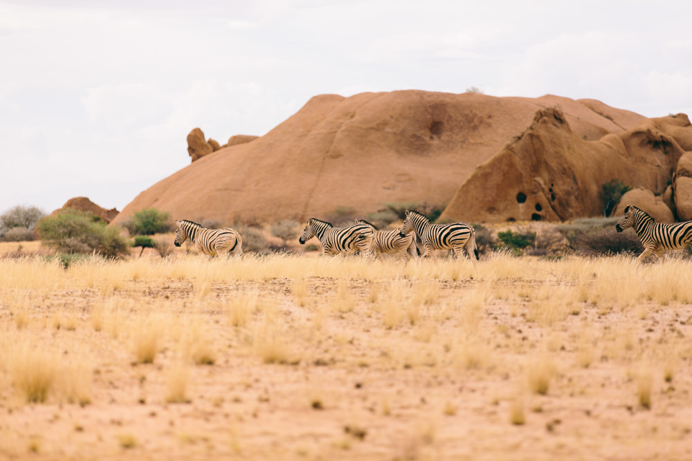 Namibia_Damaraland_Julia_Hofmann_QF_018.jpg