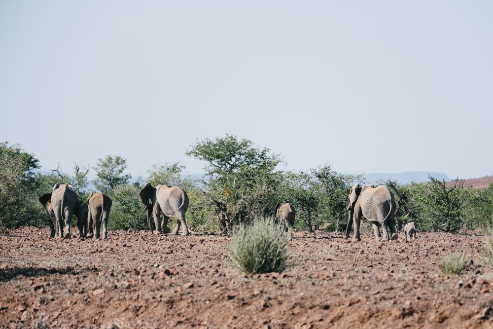 Namibia_Damaraland_Julia_Hofmann_QF_034.jpg