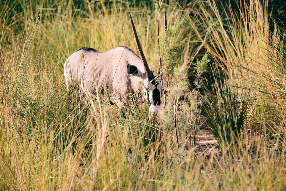 Namibia_Damaraland_Julia_Hofmann_QF_038.jpg