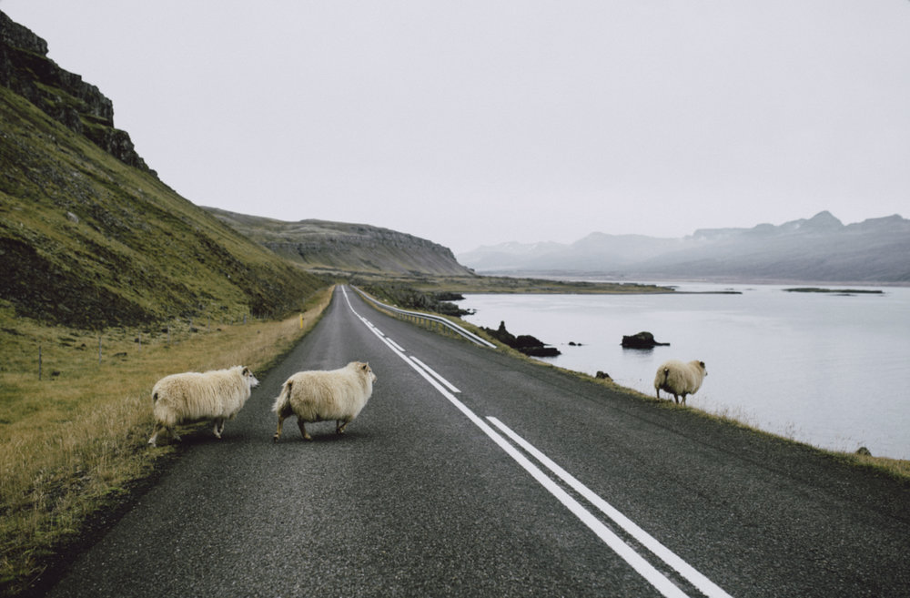 Tu-Nguyen-Wedding-Photographer-Iceland-Trip-9.jpg