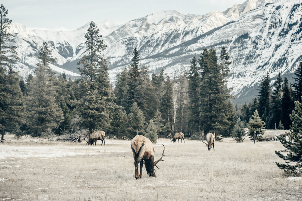 Jasper National Park-13.jpg
