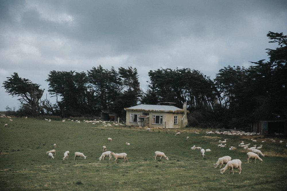 NeuseelandTeil2(125von241).jpg